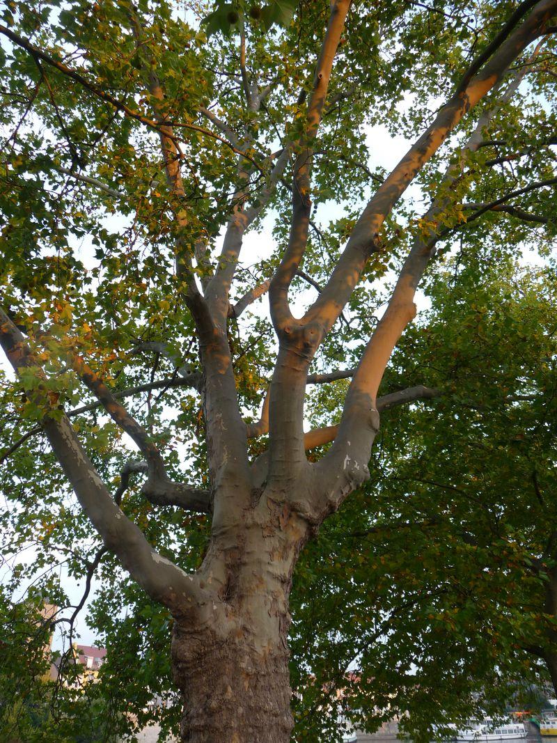 Bildergebnis für bäume bund